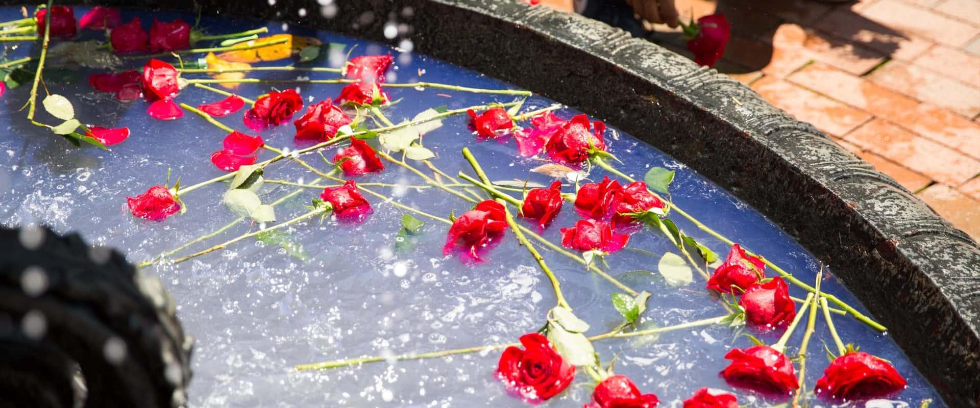 Roses in Main Fountain.