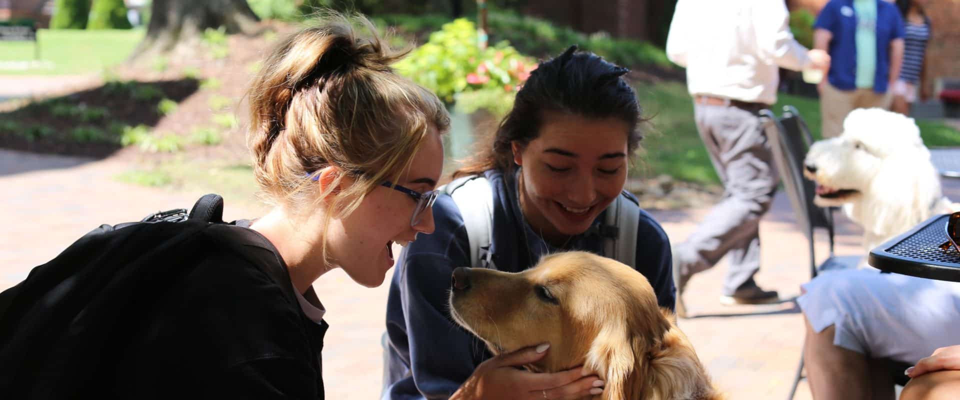 WPU students play with therapy dogs on campus.